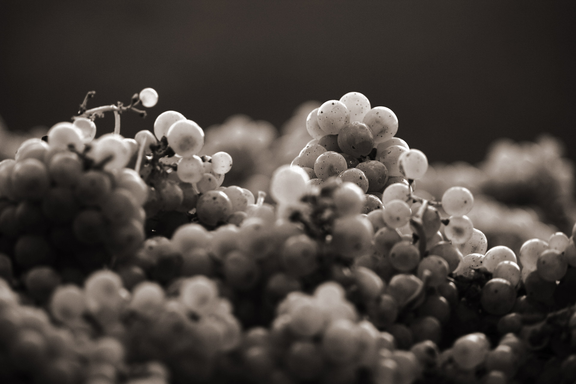 grapes photo, close-up